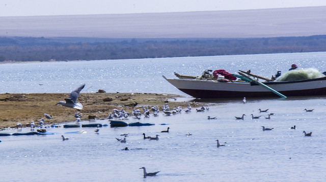 The fisherman and birds at Egyt's Wadi El-Protectorate in Fayoum