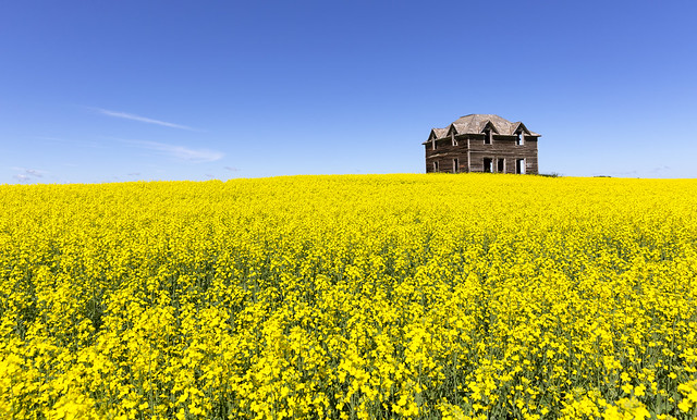 On Top a Hill of Yellow