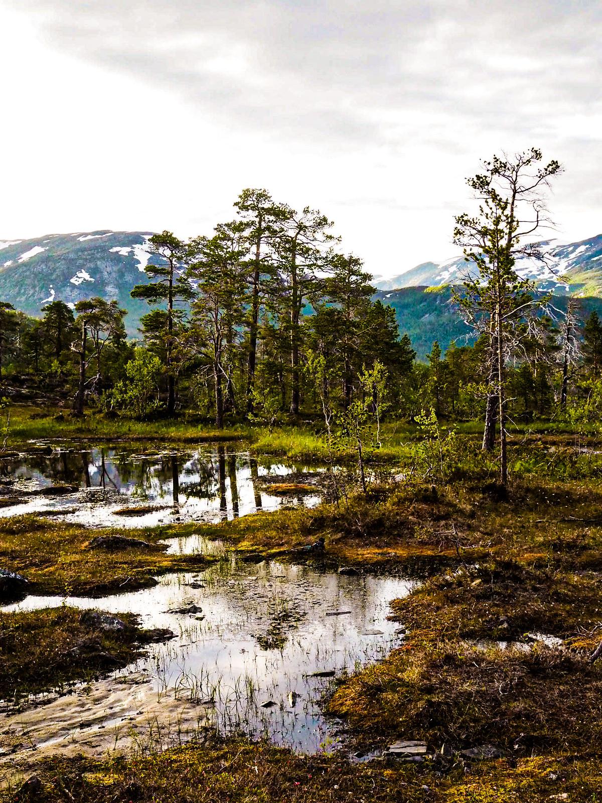 Ånderdalenin kansallispuisto-Senja