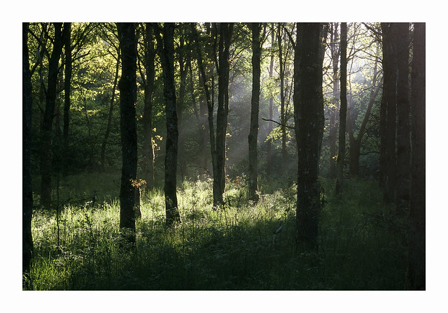 Light in small Forest - Fuji Sensia 100