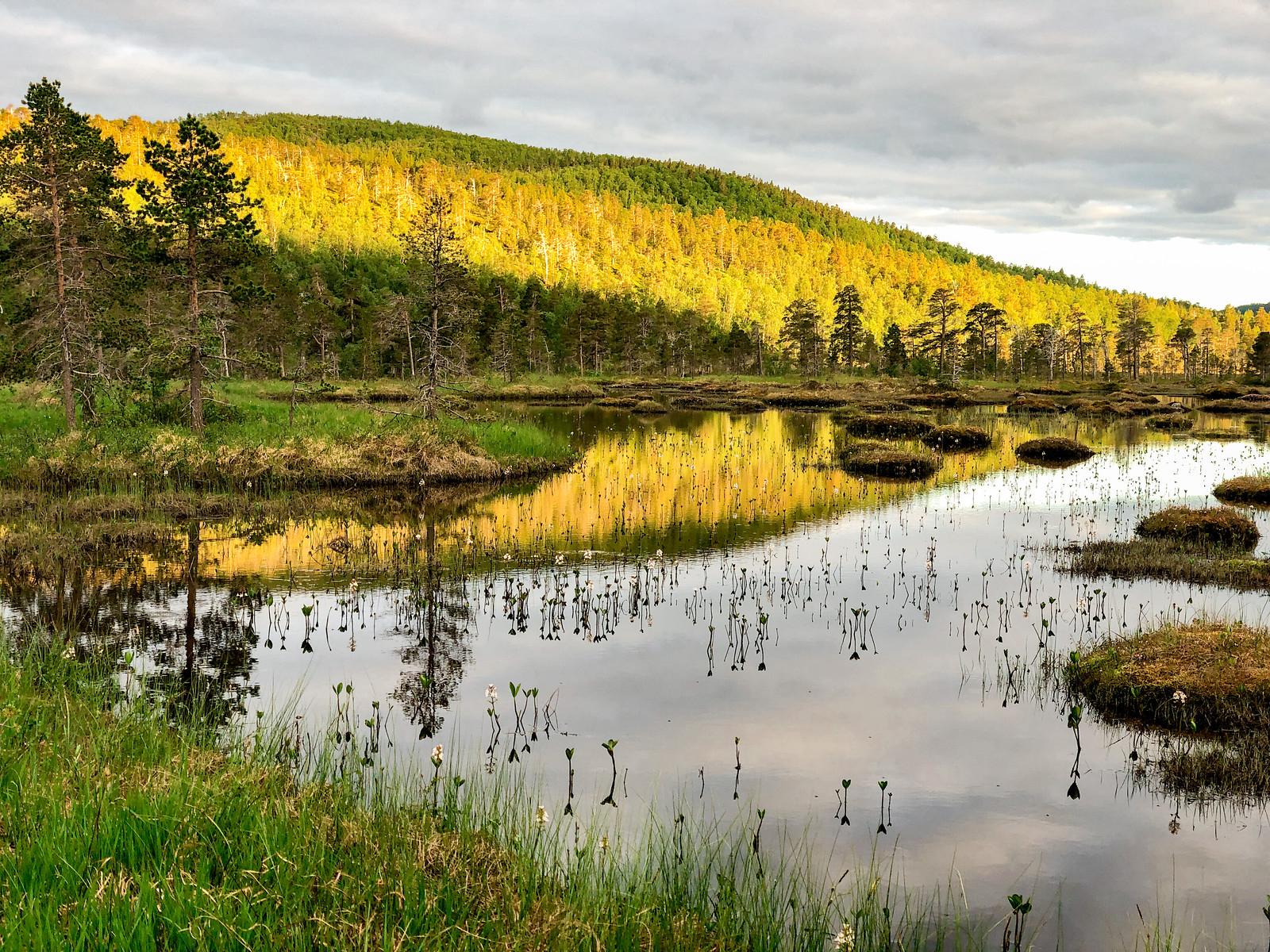 Ånderdalenin-kansallispuisto
