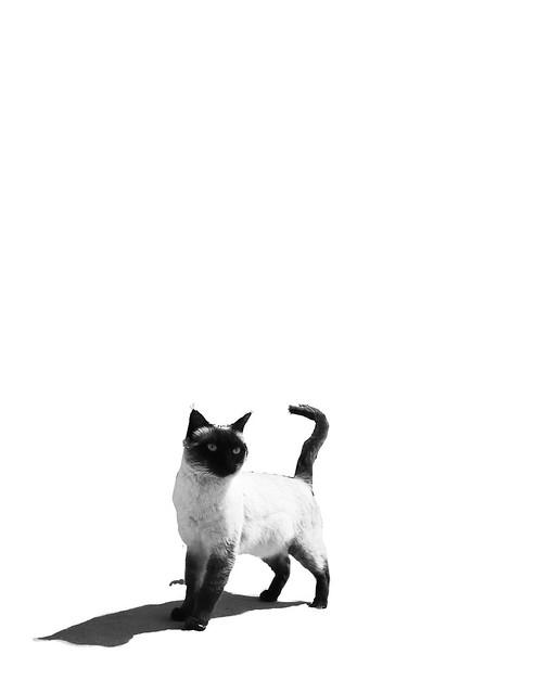 Cat in Sardina