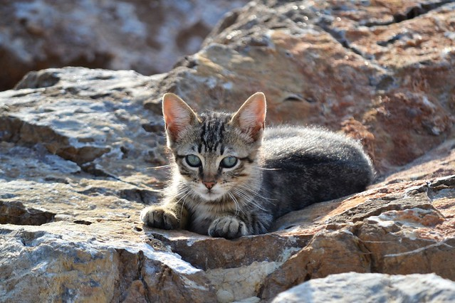 Kitten on the rocks - Gatito en las rocas