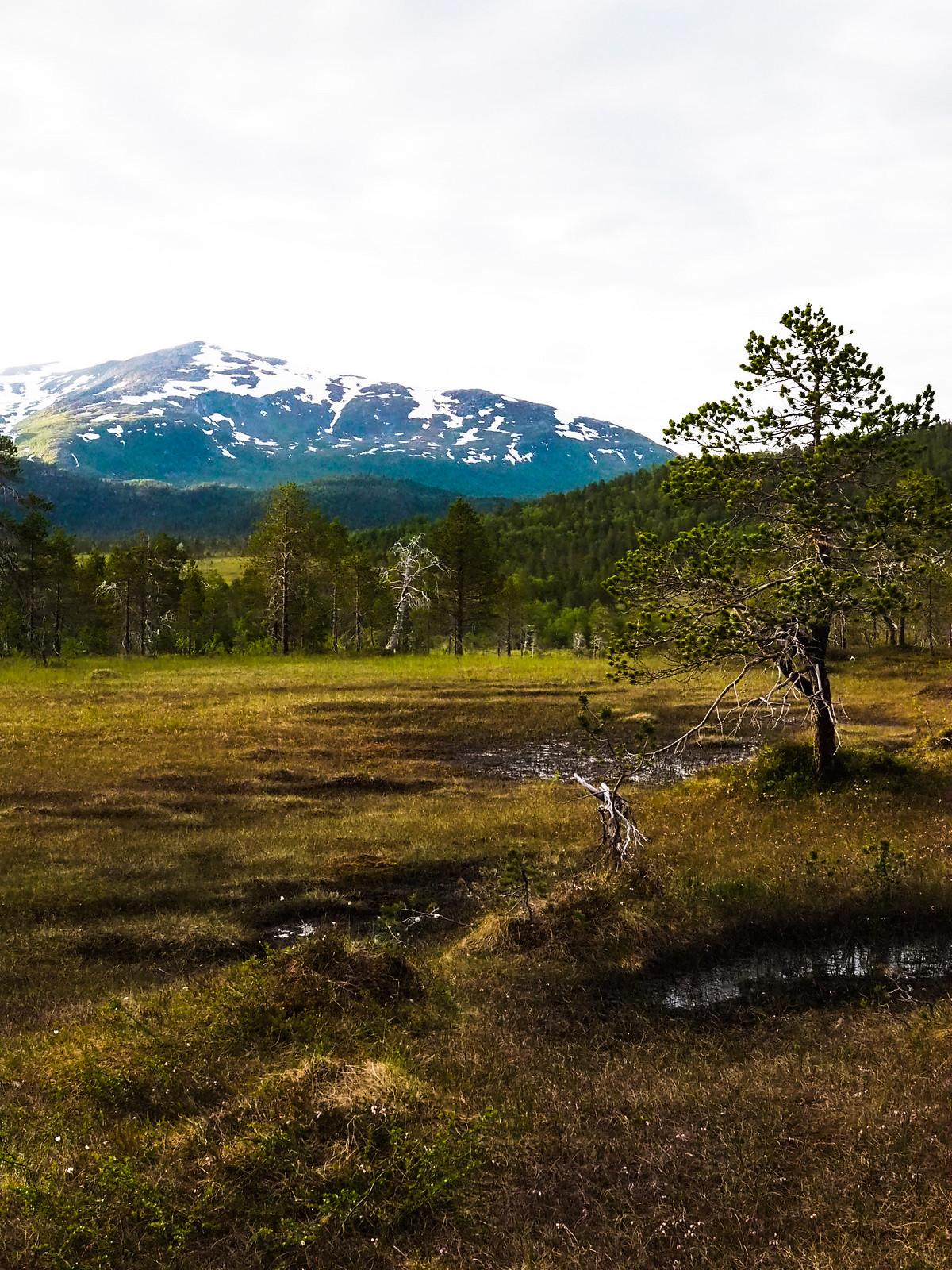 kansallispuisto-Senja