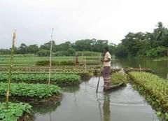 BANGLADESH- Floating Garden Agricultural Practices