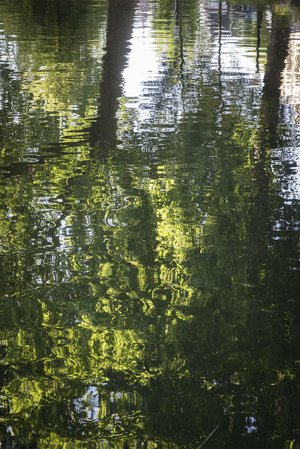 I can't resist reflections of trees!