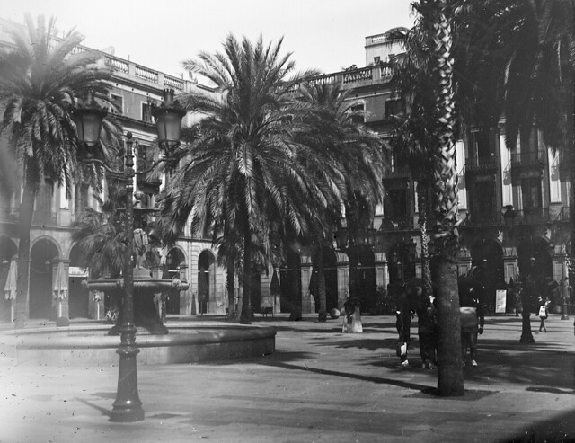 Palmeres fosques / Dark palm trees