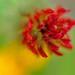 Redpetals