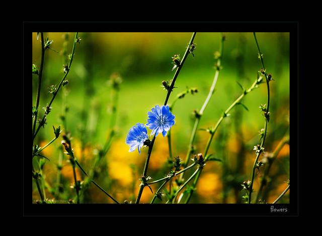 Dia-box  -  flowers