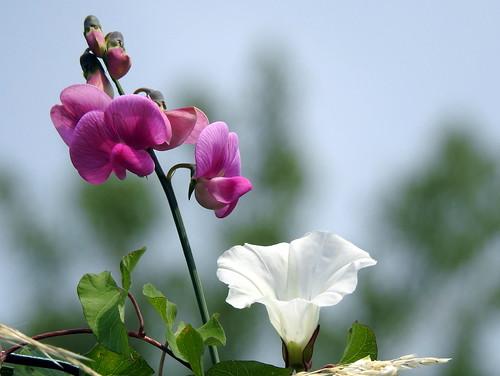 Moggio - Flora e fauna