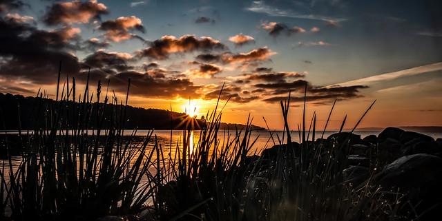 Sunrise, Wasserleben