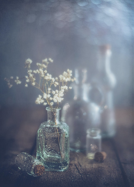 Glass Bottles Still Life