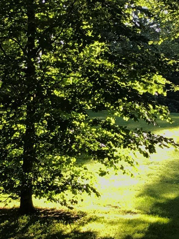 IMG_3409BredaValkenbergTegenlicht