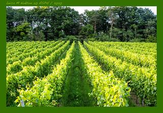 Wein-#-L2000312-#-Leica-M-Voigtländer-Nokton-50-ASPH-2020