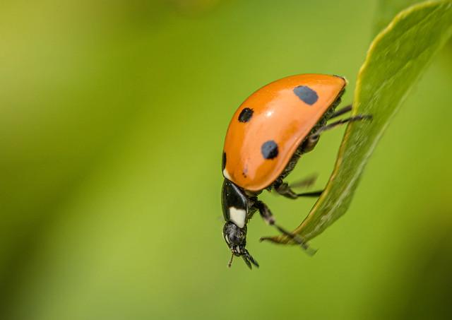Ladybird-6135-Edit.jpg