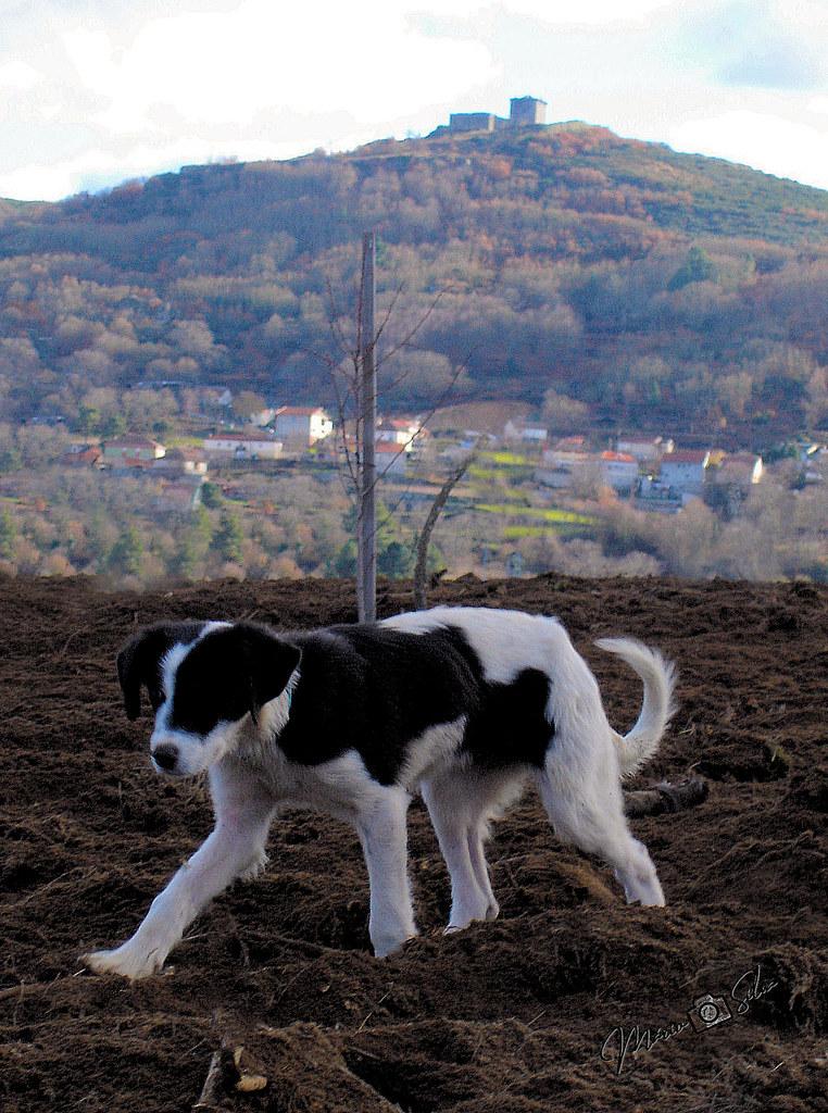 O cão, a aldeia e o castelo_ms