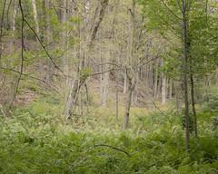 Esker Lake trail