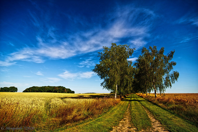 Ein Spaziergang durch die Felder bei Cappel