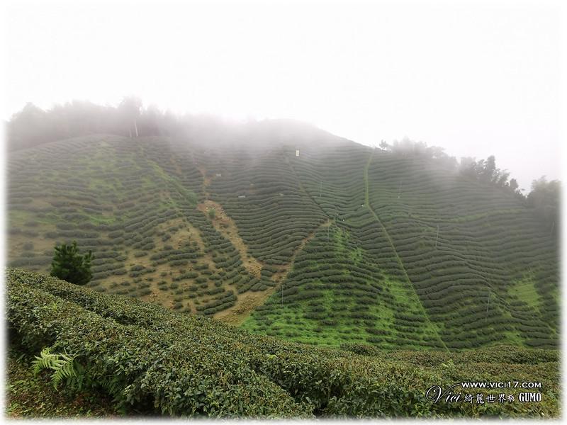 大崙山茶園觀景台069