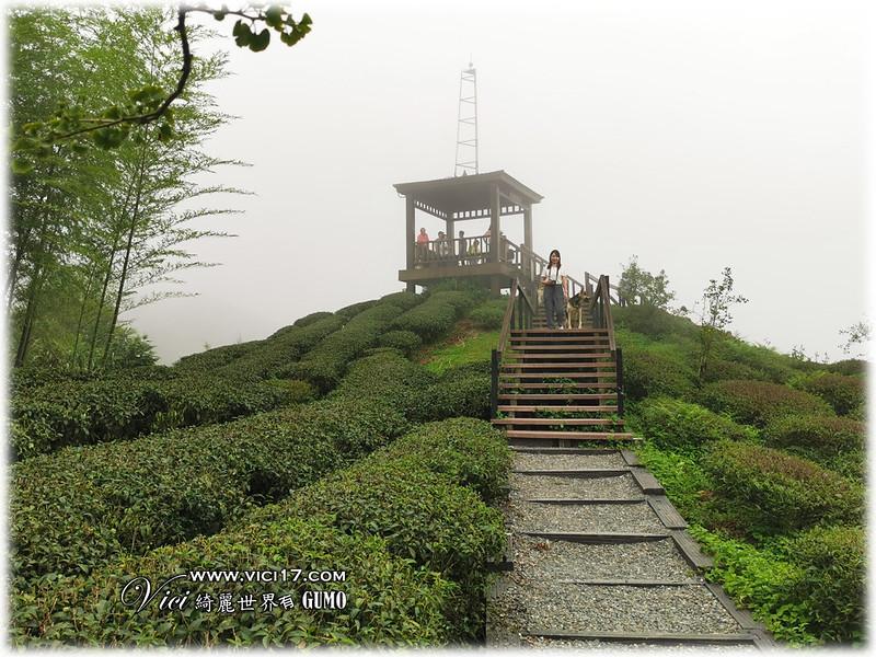 大崙山茶園觀景台054
