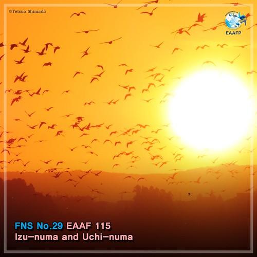 EAAF115 (Izunuma & Uchi-numa) Card News
