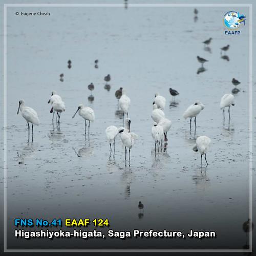 EAAF124 (Higashiyoka-higata) Card News