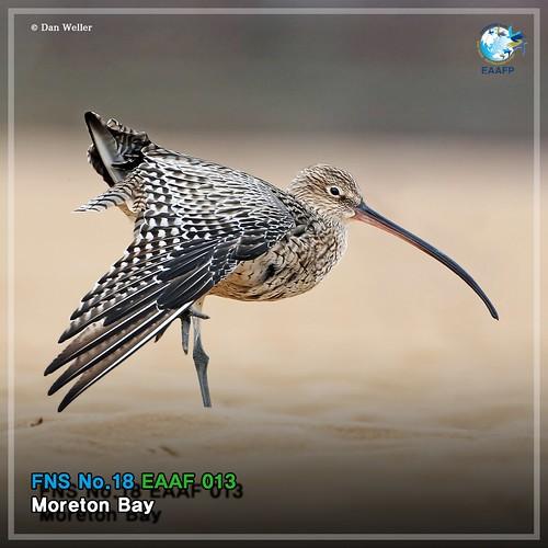 EAAF013 (Moreton Bay) Card News