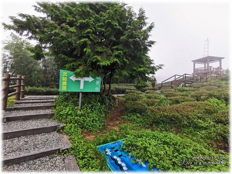 大崙山茶園觀景台093