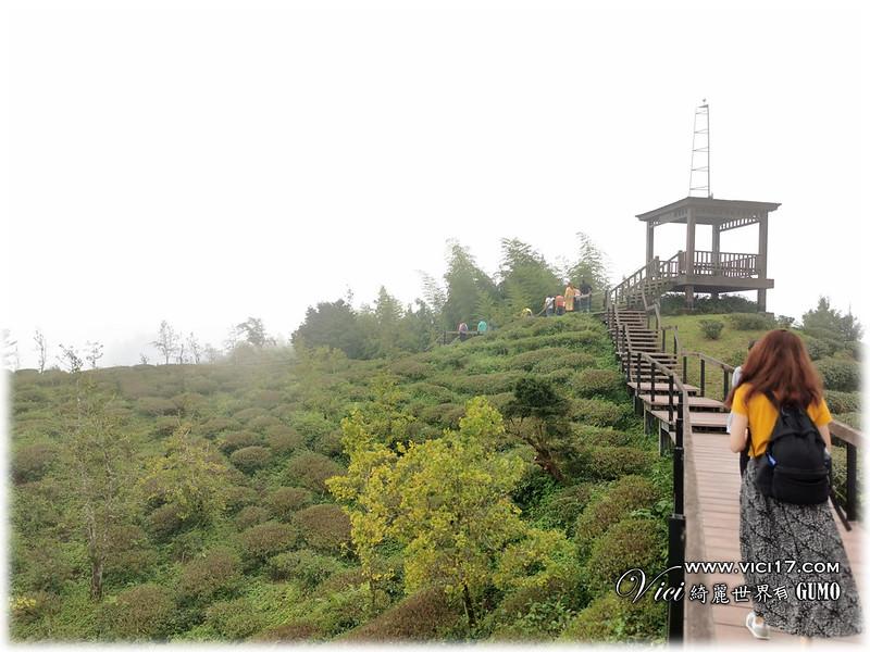 大崙山茶園觀景台085