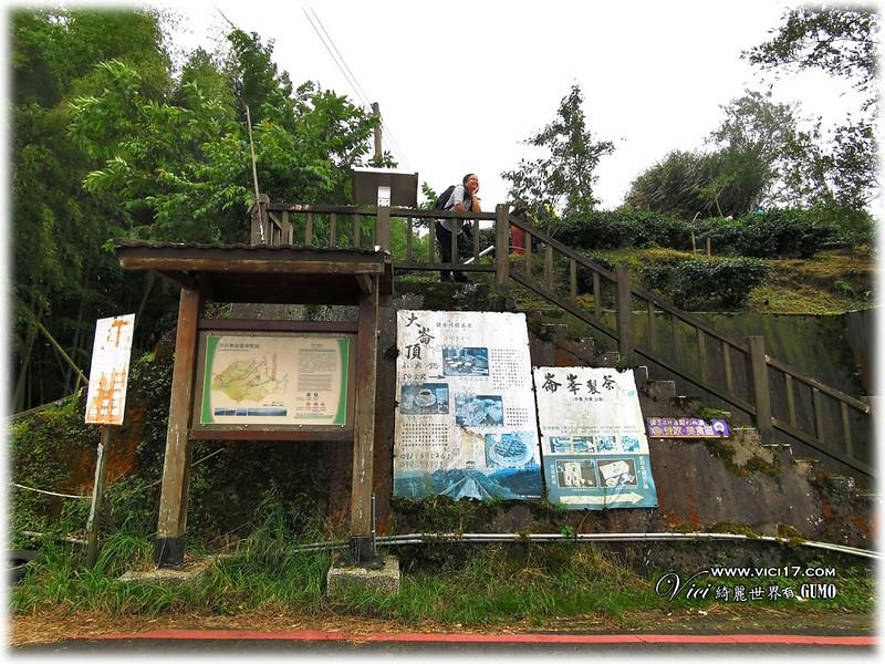 大崙山茶園觀景台027