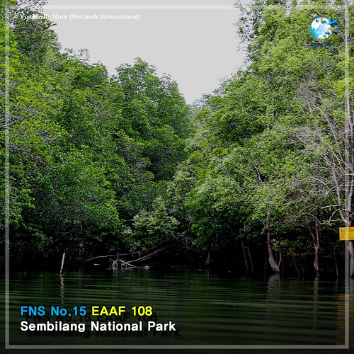 No. 15_#FlywayNetworkSite (Sembilang National Park) Card News