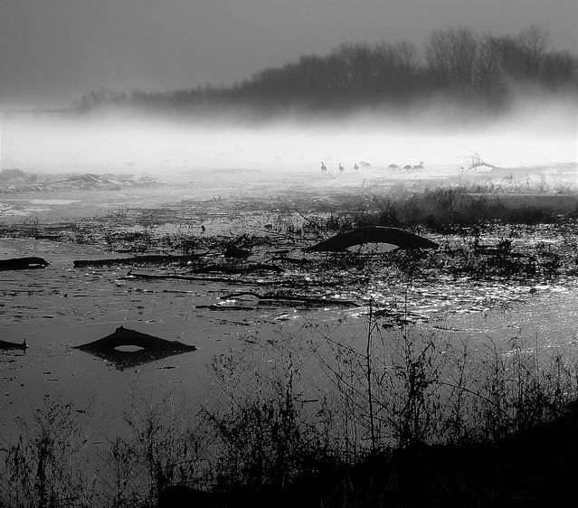 Mississippi River Flyway - Morning Fog - B&W - Explored