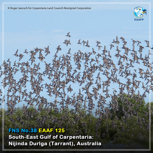 EAAF125 (South-East Gulf of Carpentaria Nijinda Durlga_Tarrant) Card News