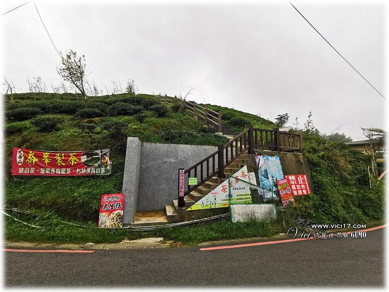 大崙山茶園觀景台095