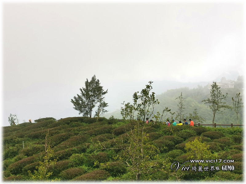大崙山茶園觀景台091