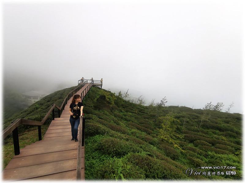 大崙山茶園觀景台066