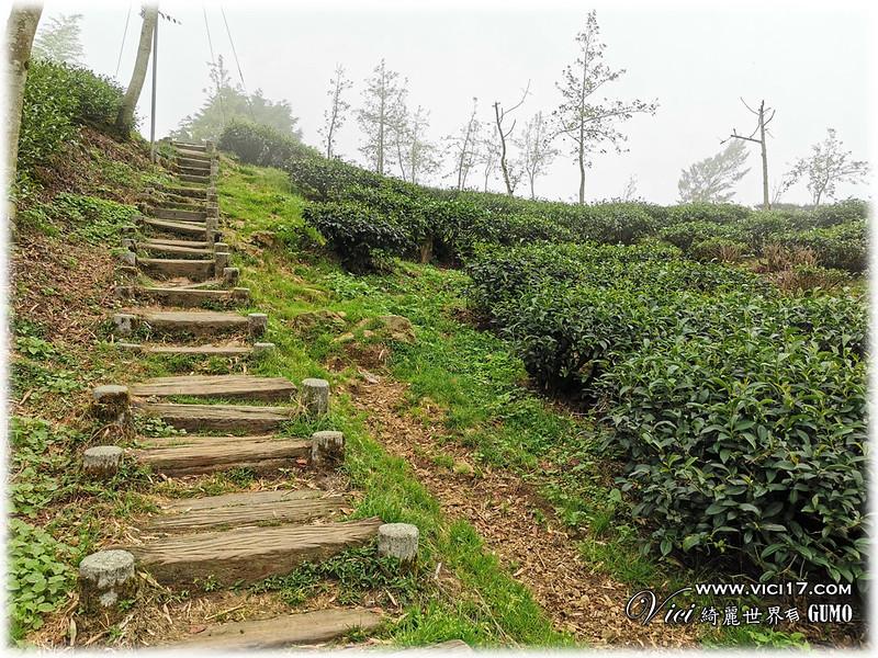 大崙山茶園觀景台051