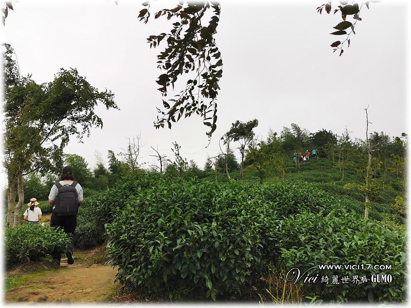 大崙山茶園觀景台035