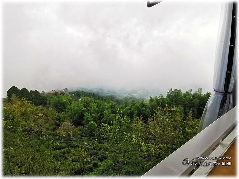 大崙山茶園觀景台016