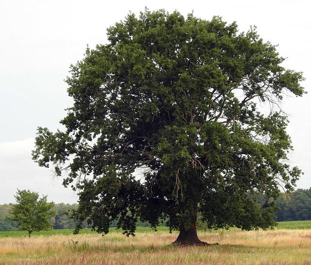 Revier Blankenfelde Sommer 2020 Moorlinse