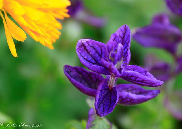 Dunham Massey Flowers 14 Jul 20 -21