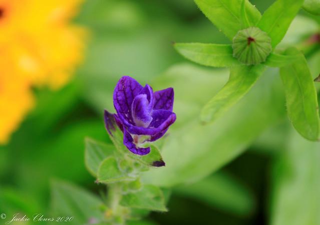Dunham Massey Flowers 14 Jul 20 -22