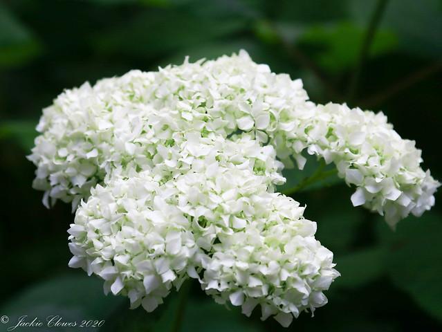 Dunham Massey Flowers 14 Jul 20 -29