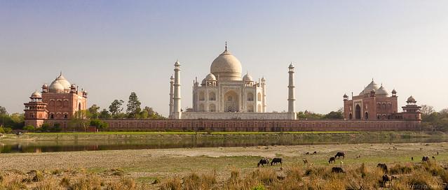 Le Taj Mahal vu depuis les rives de la Yamuna  - Taj Mahal, Agra, Inde