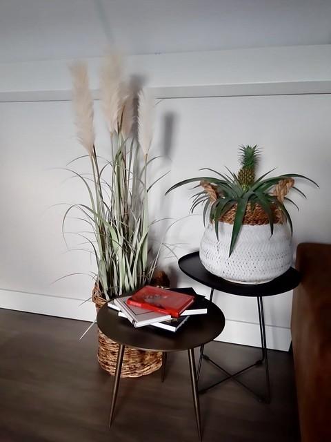 Pampasgras in zeegras mand bijzettafel plant en boeken