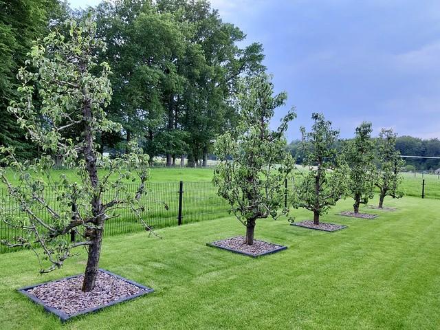 Bomen in houtsnippers in het gazon