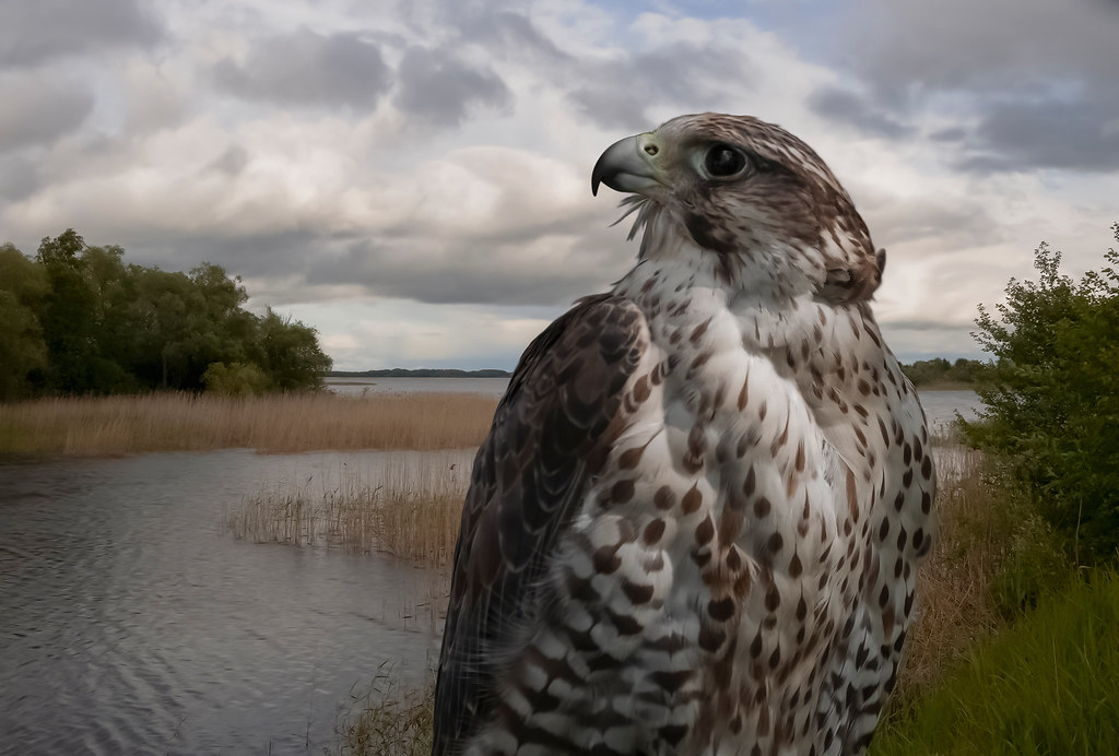 Falcon and Lake Seliger