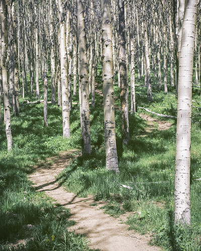 Tessa Trail  Summer Aspens ALT | by Mabry Campbell