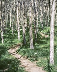 Tessa Trail  Summer Aspens ALT