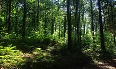 Bois des Girondins